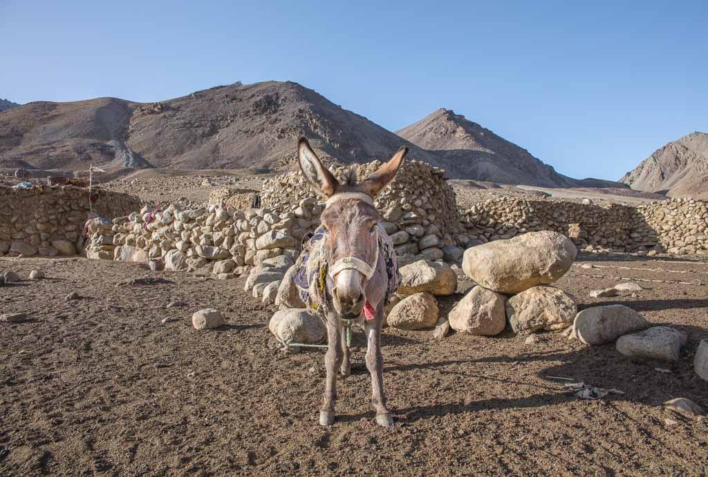 donkey, donkey wakhan, donkey afghanistan, Wakhan photos, photos Wakhan Great Pamir, Pamir, Maydon, Maydon Village, Afghanistan, Great Pamir, Great Pamir Afghanistan, Wakhan, Wakhan Valley, Wakhan Afghanistan, Wakhan Corridor