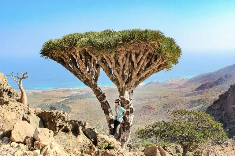 travel to Socotra, travel in Socotra, Yemen, Socotra, Socotra Island, Yemen, Socotra Yemen, Socotra Island Yemen, Yemen Island, Yemen islands, Dragon Blood Tree, Dracaena cinnabar, women dragon blood tree, girl dragon blood tree, Socotra Archipelago, Homhil, Homhil Protected Area