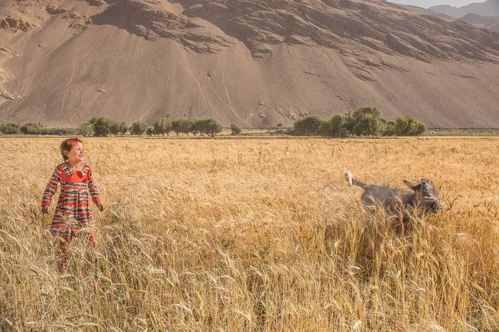 Wakhan photos, photos Wakhan, Wakhi girl, Wakhi chasing cow, Afghan girl, Afghan girl chasing cow, Qazideh, Qozideh, Wakhi, Qazideh Afghanistan, Qozideh Afghanistan, Afghanistan, Great Pamir, Great Pamir Afghanistan, Wakhan, Wakhan Valley, Wakhan Afghanistan, Wakhan Corridor