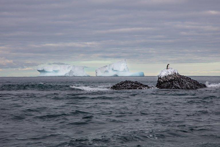 Franklin Island, Franklin Island Antarctica, Adelie Penguin, Adelie penguin Franklin Island
