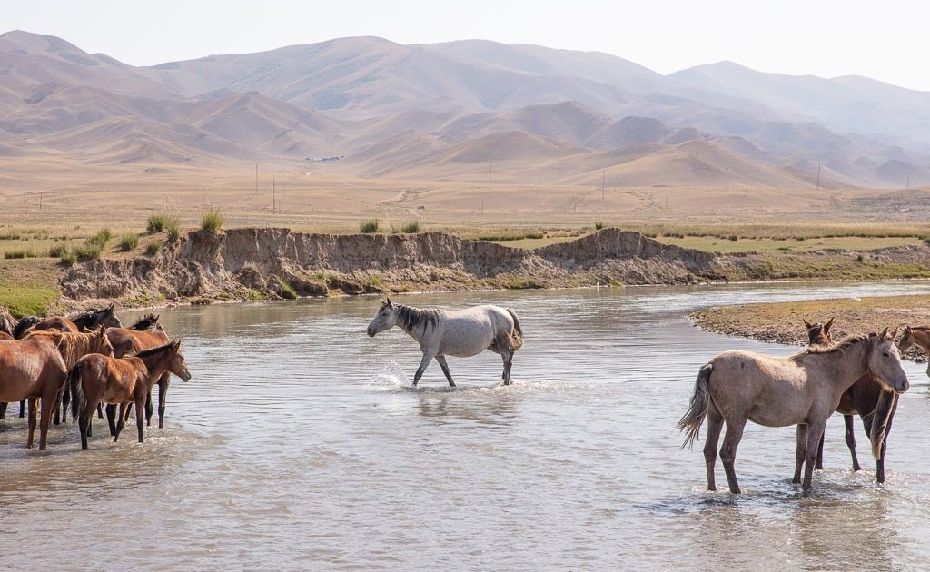 Kegen, Kazakhstan, Karkara border, Karkara border crossing, Kazakh horses, horse river