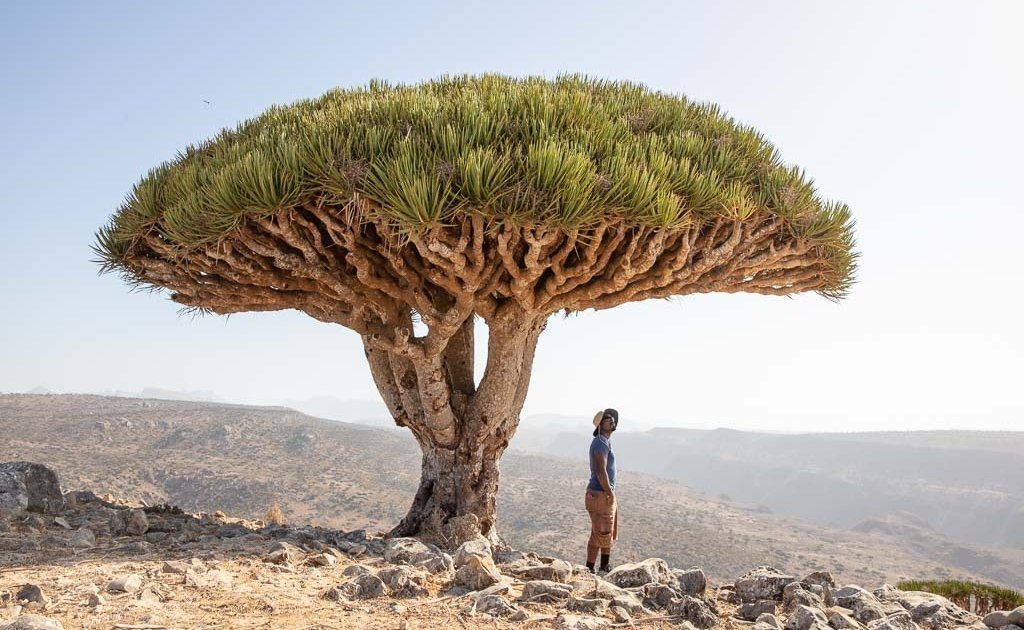 middle east travel guide, Wadi Dirhur, Firmin Forest, Dixam Plateau, Dixam dragons, Socotra, Socotra Island, Yemen, Socotra Archipelago, Dragon Blood Tree, Dracaena Cinnabari, Yemen travel