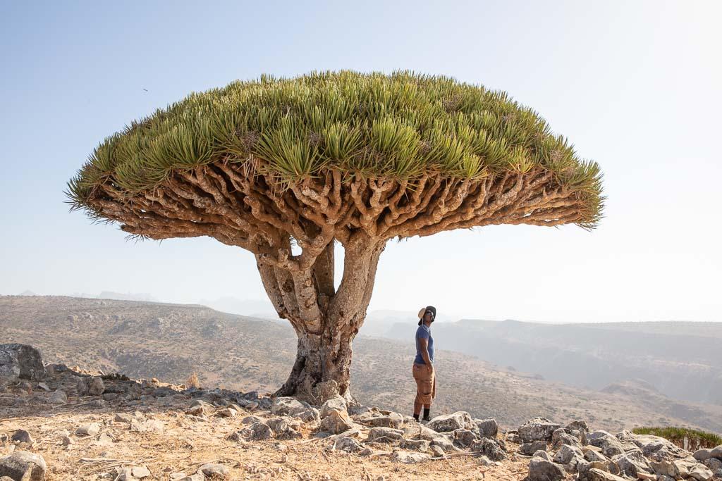 middle east travel guide, Wadi Dirhur, Firmin Forest, Dixam Plateau, Dixam dragons, Socotra, Socotra Island, Yemen, Socotra Archipelago, Dragon Blood Tree, Dracaena Cinnabari, Yemen travel