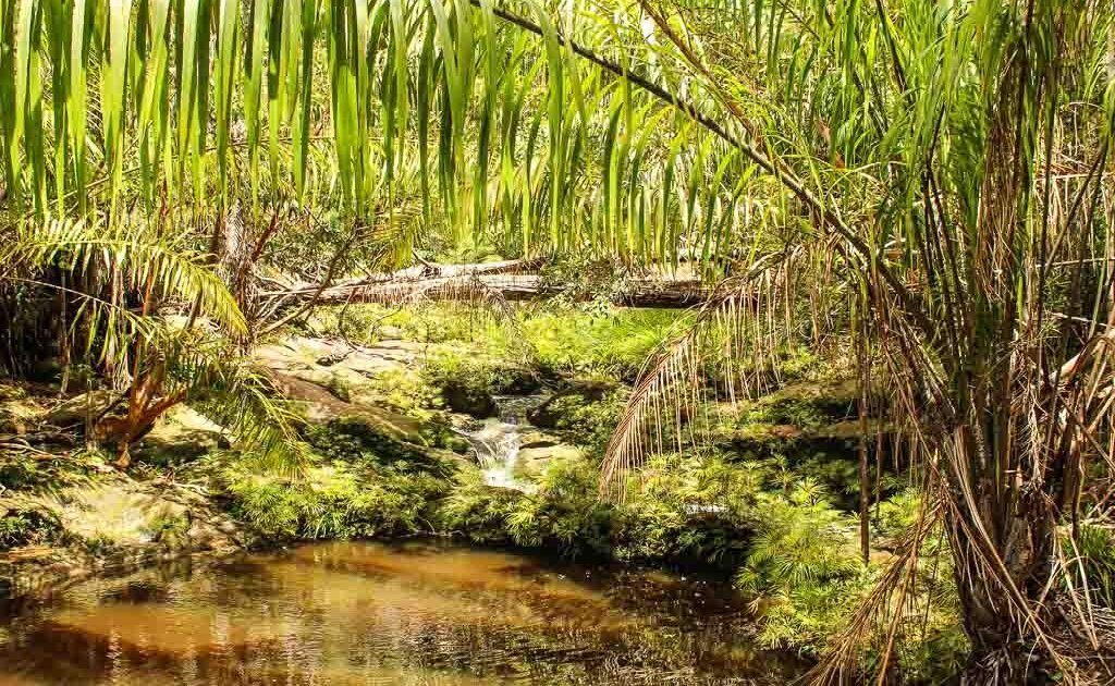 Tajur Trail, Tajur, Asia, Malaysia, Borneo, Sarawak, Bako National Park, Bako, Jungle, Rainforest