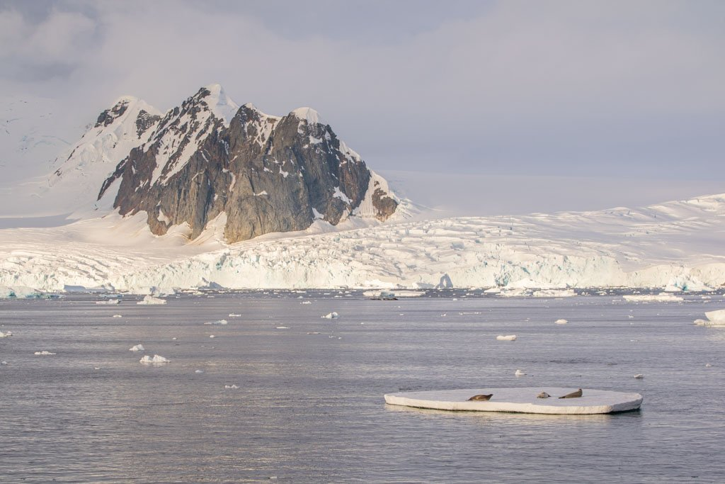 Hotine Glacier, Girard Bay, Graham Land, Lemaire Channel, Antarctica, seals ice floe