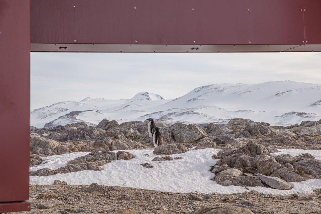 Gondwana Station, Terra Nova Bay, Antarctica, Adelie, Adelie penguins, penguins