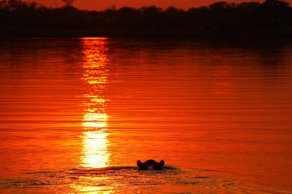 Hippopotamus, Okavango River, Mahango Game Reserve, Bwabwata National Park, Caprivi Strip, Namibia, Africa
